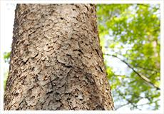天然木である無垢材を使った「自然素材の家」